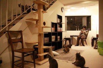 Fantastic Cat café